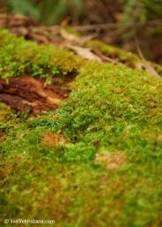 Rainforest walks